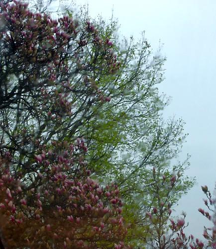 April 2011 050