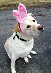 Zeus_bunny_411