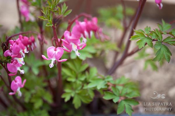 Flowers-11sr