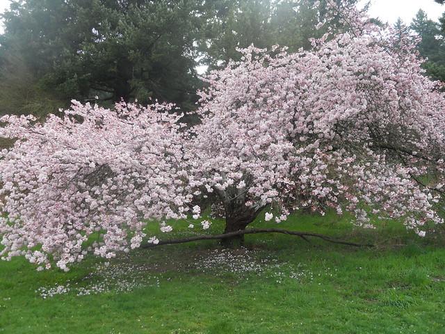 spring2011 211