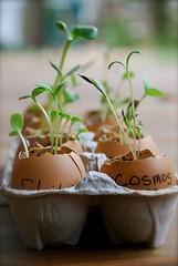 Happy Egglings