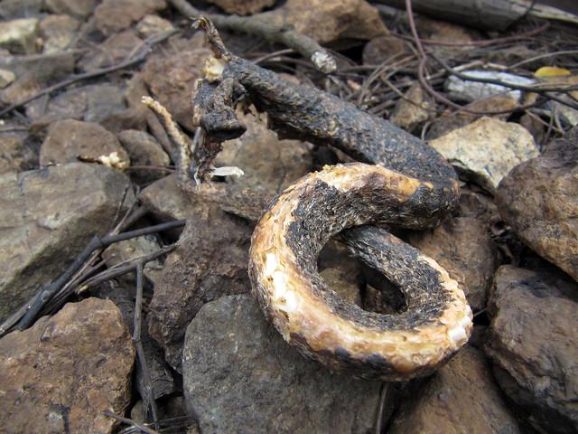 A Snake's Tail