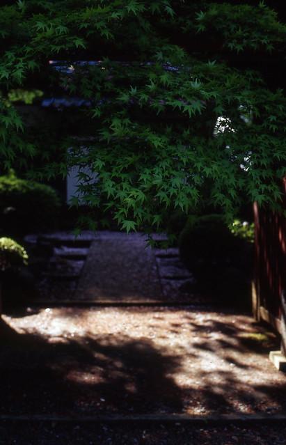 参道の陰影