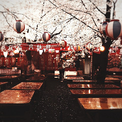 hanami in the rain *explore (Rin.U) Tags: nature rain japan square kyoto cherryblossom iphone idarkroom absoluterouge tiltshiftgen hipstamatic filterstorm truthandillusion