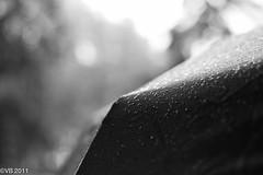 Raindrops (locorocker) Tags: madrid water rain umbrella spain wasser europa europe eu espana eur regen spanien regenschirm