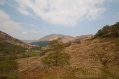 Scotland-6598