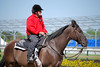 2010-04-29 (15) outrider (JLeeFleenor) Tags: horseracing thoroughbredracing photo photography photos pimlico outrider trackpeople horsepeople marylandhorseracing marylandracing baltimore md thoroughbreds caballo cheval faras ma hest hevonen each alogo soos kuda gigi cavallo uma pfeerd koin حصان кон cavalo 马 konj häst άλογο סוס घोड़ा 馬 koń лошадь horses maryland