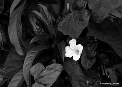 Among the darkness I'm HOPE (mustapha_ahmad) Tags: river nikon photographer bangladesh padma 2011 d90 mustaphaahmad maowa