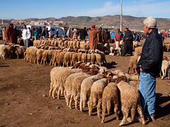 Market in Azrou (Evgeni Zotov) Tags: africa street boy people man animal town stand sheep market row morocco maroc lad buy wait marocco maghreb customer bazaar sell trade marruecos marketeer seller marokko moroccan owner provincial marrocos fas trader marocko azrou maroko المغرب モロッコ 아프리카 מרוקו 摩洛哥 марокко 왕국 회교 मोरक्को 북서부의