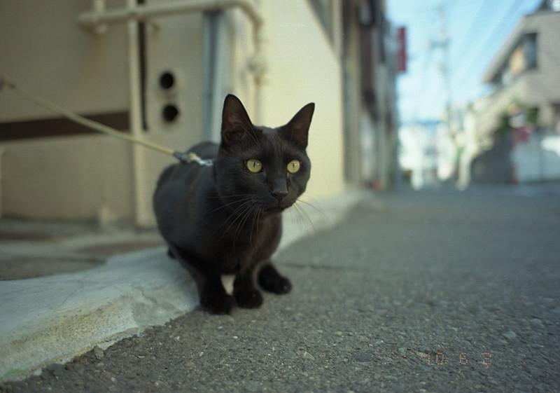 繋がれ黒猫