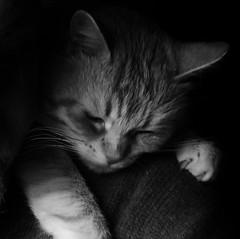 ciccio -explore- (archifra -francesco de vincenzi-) Tags: bw italy cat chat gato gatto ciccio molise isernia archifraisernia francescodevincenzi mygearandme