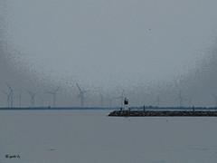 Who Has Seen the Wind (gabi-h) Tags: sky lighthouse ontario water birds kingston lakeontario breakwater windturbines wolfeisland gabih