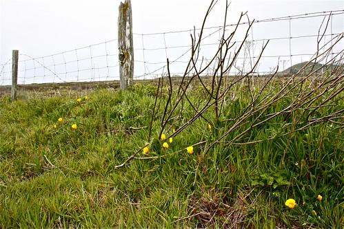 Fenced 01