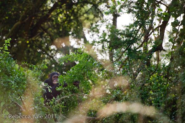 RYALE_Rwanda_Uganda_Safari-260
