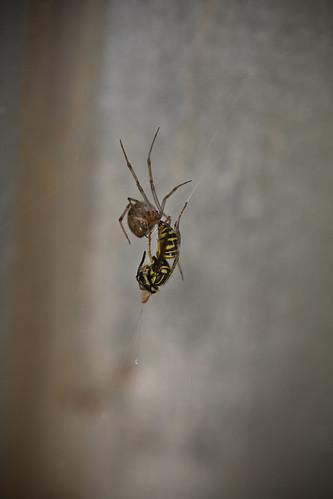 110616 Spider