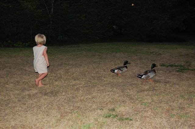 DuckChasing