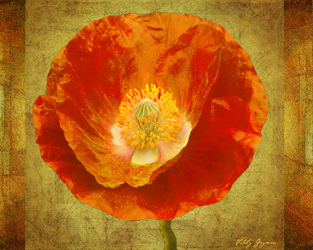 321Sun Poppy-Large-web