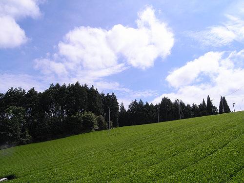 茶畑@山添村-01