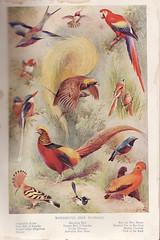 Birds (garts66) Tags: birds vintage ephemera parrots
