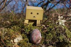 Easter hunt pt. 2 (siljevdm) Tags: nature forest easter natural egg hunt danbo danboard danbosadventure