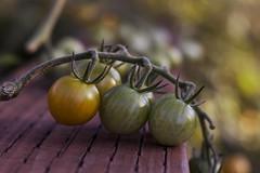 Ripening Tomatoes (HK Passey) Tags: food healthyeating produce tomatoes cooking fresh freshfood gardening green homegrown kitchengarden nature ripening tasty