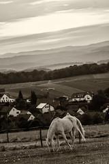 Dinner with a view (ralfkai41) Tags: sephia animal landscape landschaft monochrom nature tiere sw bw schwarzweis natur horse pferd blackwhite
