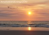 Sunrise Birds Flying Over Atlantic Ocean, Amelia Island