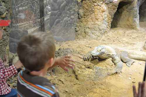 Fort Worth Zoo, Homeschool Day at Zoo, Lizard