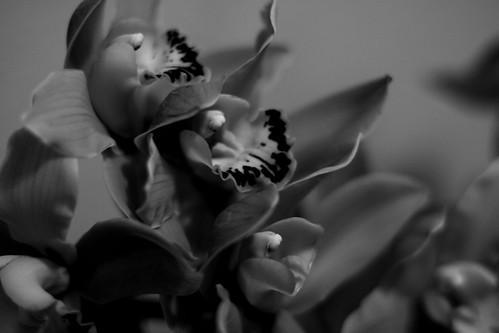 3.27 - Flores de La Primavera