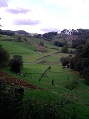 P171010_17.51 (naialaka) Tags: natura basoa belarra baserria berdea paisajea