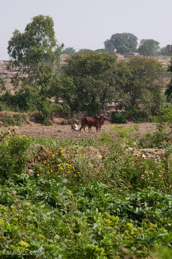 Rajasthan 2010 - Voyage au pays des Maharadjas - 2ème Partie 5598411071_a4339f453d_o
