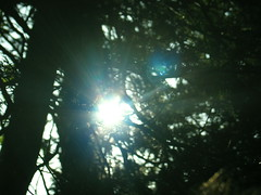 shining (Andrew 62) Tags: woods leicestershire shining gumley