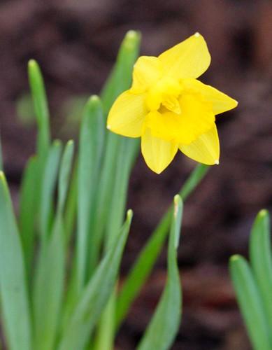 14 | 52: Spring blossoms