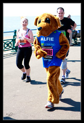 Things You Don't Expect to See Running a Marathon..... A Furry Dog ... or More specifically Alfie, mascot for the Guide Dogs. (MarkLandonPhotography) Tags: costumes dog sun hot race fur fun marathon mascot heat seafront fancydress alfie roasting 262 guidedog 262miles nutters guidedogsfortheblind 10thapril brightonmarathon