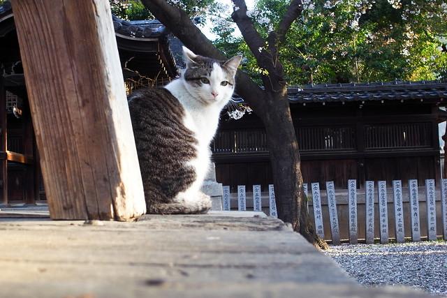 Today's Cat@2011-04-12