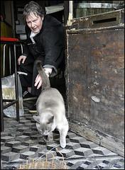 le siamois (grard lavalette) Tags: paris caf bar chat femme grard 11me photographe lavalette siamois fiatlux consommateur tousdroitsrservs grardlavalettephotographeparis11me grardlavalettephotographeparis
