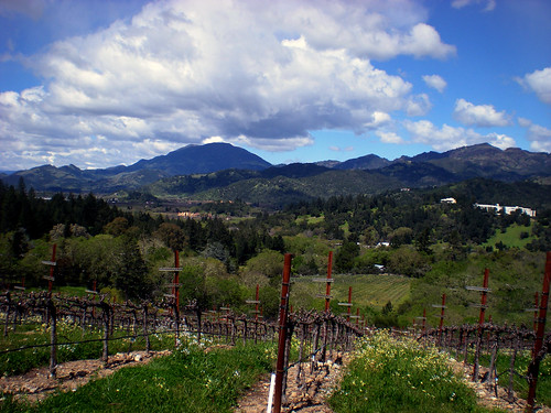 wine country (3)