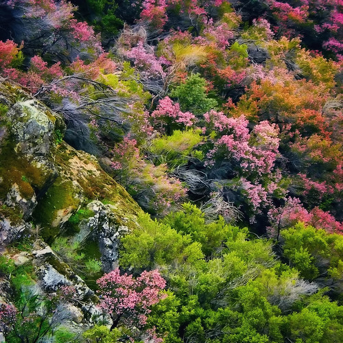 Wild Spring
