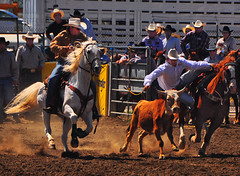 Steer Wrestling (Bill Gracey) Tags: california horse cowboy beautifullight rodeo steer southerncalifornia rider sportsaction backlighting steerwrestling earlymorninglight bulldogging lakesiderodeo