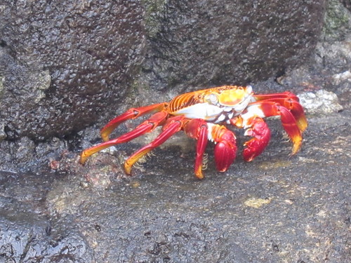 Crab Walking