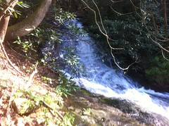 Fourth Cascade of Falls on Last Branch of Tickanetley Creek