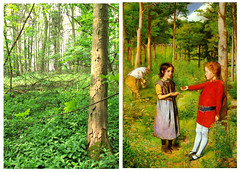 """The Woodman's Daughter"" (location photo ii) Wytham Wood (Martin Beek) Tags: art poem victorian location oxford ruskin tutorial millais preraphaelite inthewoods botley prb victorianpainting victorianartists thewoodmansdaughter coventrypatmore wythamwood locatiion guidhallartgallery"