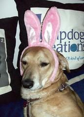 Sophie_bunny_411