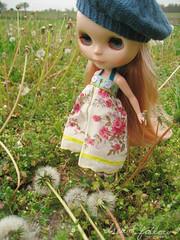 wesley in dandelions