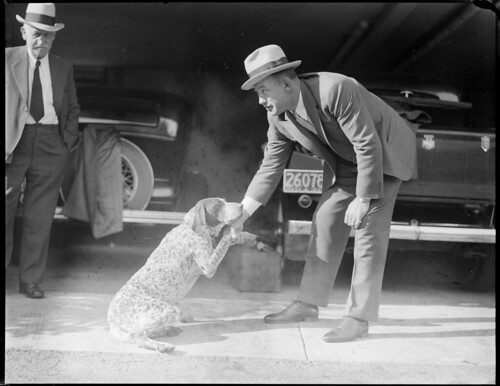 black and white hands shaking. Man shaking dog#39;s hand