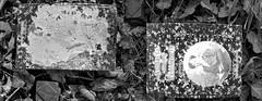 Diptych Awakenings 3.4.2011, 15.8.2009 - Zentralfriedhof Wien, 1. Tor, Alte Jdische Abteilung (hedbavny) Tags: blackandwhite friedhof cemetery grave graveyard buch book diptych fear tombstone pickup save mementomori keep weathered grab schwarzweiss grabstein jewishcemetery preserve timor remains find memorabilia zentralfriedhof tombe erinnerung fund diptychon beobachtung furcht gefunden jdisch funds