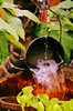 Fire & Water (bigbrowneyez) Tags: flowers brown motion black hot cold green nature wet water leaves silver fire gold unique dramatic dry running greenery waterfountain pouring tipsy tipping pail firewater fillup tipover fountainwater flickrgold