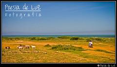 Trayecto (Constanza y Juan Pablo) Tags: sea mar colombia desert desierto marcaribe caribe guajira sudamérica laguajira wayu puntagallinas