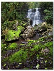 Selva Falls - Border Ranges National Park (danishpm) Tags: green canon landscape waterfall moss rainforest rocks sigma australia wideangle nsw aussie aus 1020mm manfrotto northernnsw eos450d 450d borderrangesnationalpark bestofaustralia sorenmartensen selvafalls