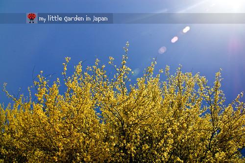 Spring-in-Sonora-desert-3